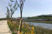 용인시, 경안천 갈담교~초부교 구간 왕벚나무길 조성